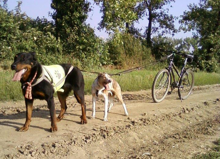 Szárnypróbálgatásunk bikejöringben Jettával és Ozzy-val