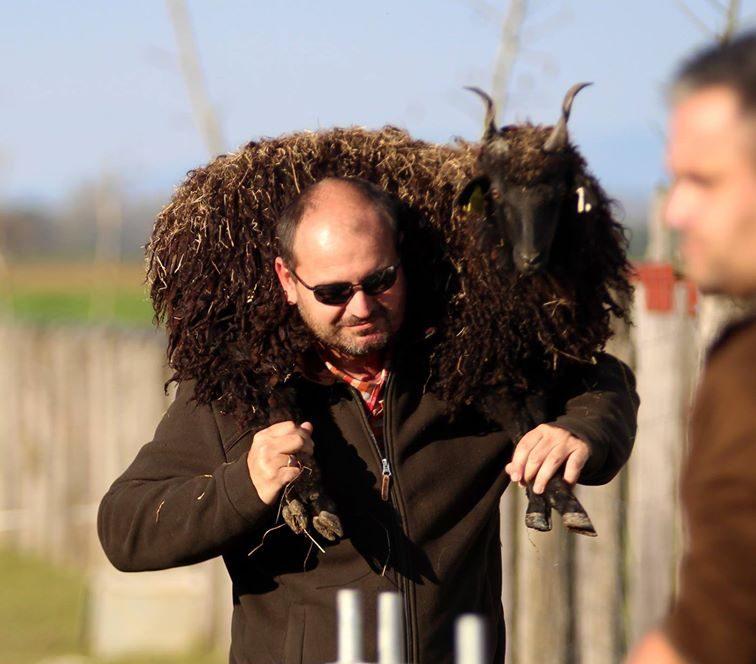 Imre nem vette félvállról a juhok igényeit :-)