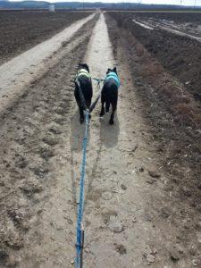 A teljes felszerelés a távtartó végétől a kutyákig