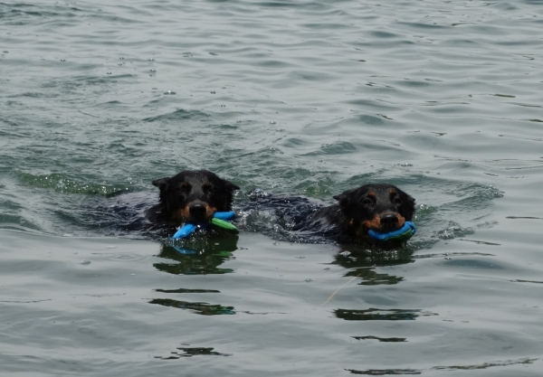 Úsztatás