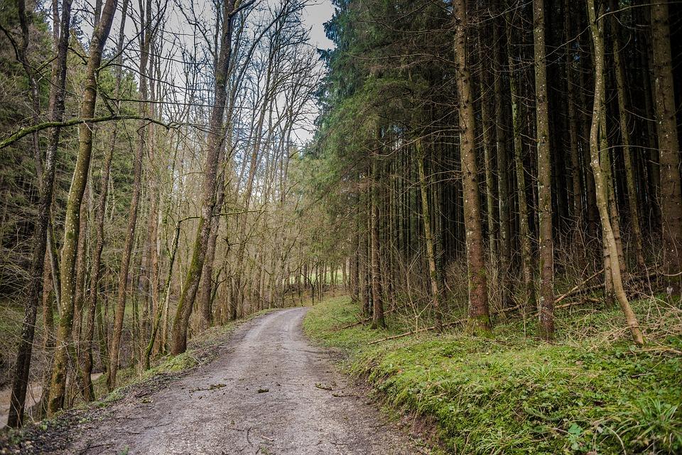 Kölyökállatok az erdőben