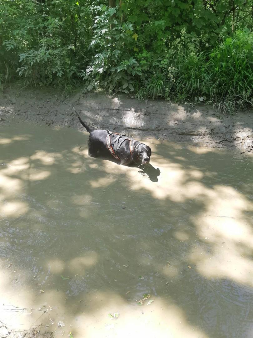 A nagy melegben figyelni kell a kutyák hűtésére is