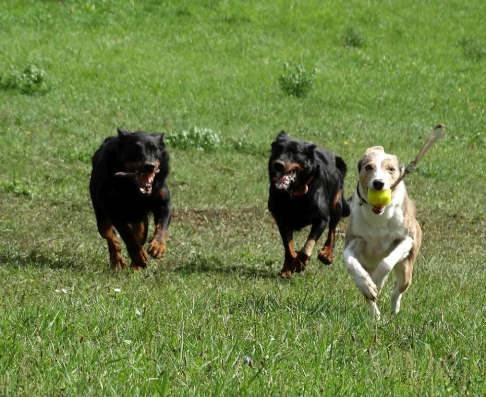 Kutyás futás - Figyeljünk a kutyánk súlyára nyáron