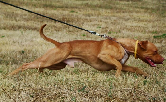 fogyás kutyáknál nyáron